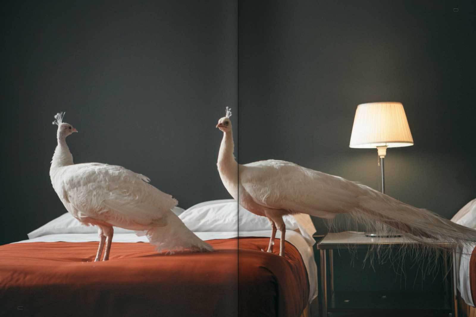 Doug Aitken spread17
